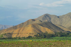 Collines de désert et champ vert plat Image stock