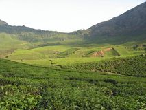 COLLINES DE MUNNAR Photos stock