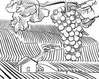 Collines de vignoble avec des raisins accrochants dans le premier plan illustration libre de droits
