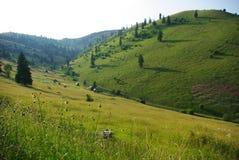 Collines en Transylvanie image libre de droits