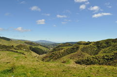 Collines et paysage du Nouvelle-Zélande avec des prés Images libres de droits