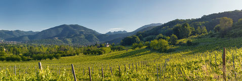 Collines et wineyards Image stock