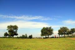 Collines, forêts et prairies ensoleillées Images stock