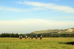 Collines, forêts et prairies ensoleillées Photo stock