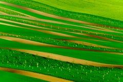 Collines onduleuses vertes en Moravie du sud Image libre de droits