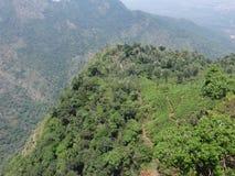 Collines semblant belles avec des arbres de thé avec la vue impressionnante Photos stock