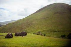 Collines sur Isla de Pascua Rapa Nui Pâques Photographie stock libre de droits