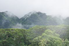 Collines tropicales brumeuses en Hawaï Photographie stock