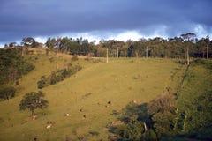 Collines vertes au crépuscule Images stock