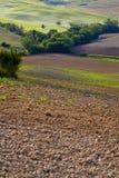 Collines vertes de la Toscane Images libres de droits