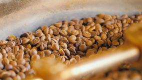 Colling of coffee beans. After roasting closeup stock video