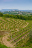Collio vineyards Stock Photography