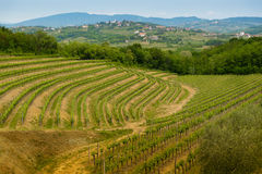Collio vineyards Royalty Free Stock Photography