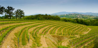 Collio vineyards Stock Photos