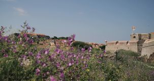 Collioure, Francja Widok Od kuszetki W porcie Collioure Górkowaty pejzaż miejski W Pogodnym wiosna dniu zdjęcie wideo