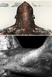 Collo muscolare del ` s degli uomini Fotografia Stock Libera da Diritti