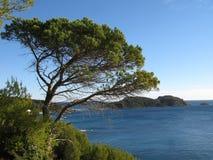 Collochi il taillat del protégé du cap, la varietà, Francia Fotografia Stock