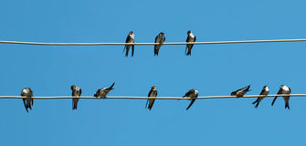 Colloqui degli uccelli Fotografia Stock Libera da Diritti