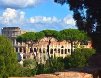 Colloseum Italy. With trees and blue sky Stock Photography