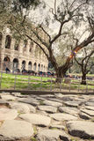 Colloseum old street. In Rome Italy Royalty Free Stock Photo