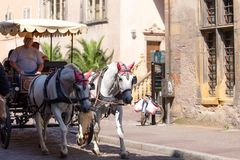 Colmar old town, Mode of transport. Colmar, France - Jun, 15, 2018: View on old town of Colmar city, mode of transport with two horses, tourist attraction on royalty free stock images