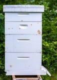 Colmeia básica da abelha fotografia de stock