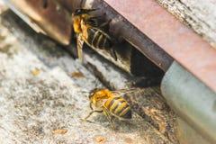 Colmeia com abelhas Fotografia de Stock