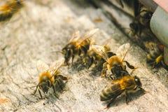 Colmeia com abelhas Fotos de Stock