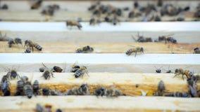 Colmeia com abelhas vídeos de arquivo