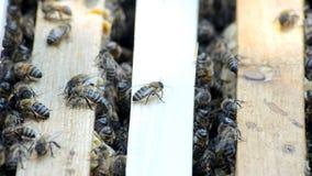 Colmeia com abelhas video estoque