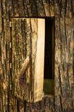 Colmeia da árvore Imagens de Stock