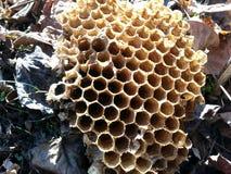 Colmeia da abelha Fotografia de Stock Royalty Free