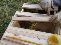 Colmeia da abelha Foto de Stock