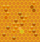 Colmeia da abelha com mel Fotos de Stock Royalty Free