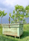 Colmeia da abelha e flor da acácia Imagens de Stock Royalty Free