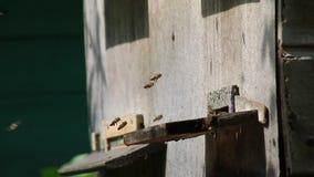 Colmeia da abelha no trabalho filme