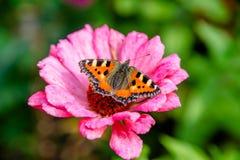 Colmeia da borboleta Fotos de Stock