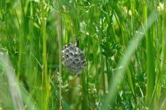 Colmeia da vespa que adere-se a uma planta foto de stock royalty free