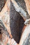 Colmeia das vespas O ninho do zangão fotografia de stock