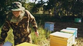 Colmeia de madeira aberta do homem novo do apicultor para verificar ao trabalhar no apiário video estoque