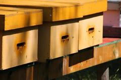 Colmeia desvanecida da abelha do amarelo da mostarda Fotografia de Stock Royalty Free