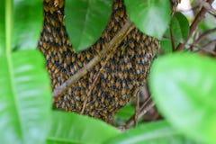 Colmeia do zumbido com abelhas da multidão Fotografia de Stock
