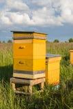Colmeia dois amarela na exploração agrícola do verão no prado verde com céu azul foto de stock