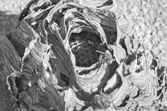 Colmeia dos zangões - ninho das vespas foto de stock royalty free