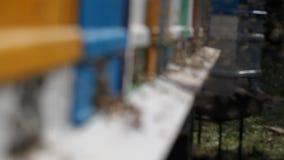 Colmeia em um apiário vídeos de arquivo