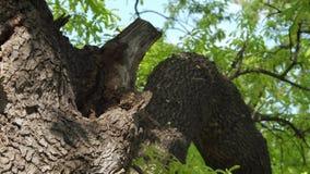 Colmeia no tronco de árvore video estoque