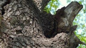 Colmeia no tronco de árvore - parte 2 vídeos de arquivo