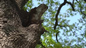 Colmeia no tronco de ?rvore - movimento lento video estoque