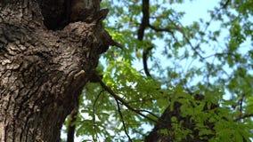 Colmeia no tronco de ?rvore - movimento lento filme