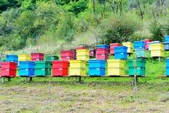 Colmeias coloridas Imagem de Stock